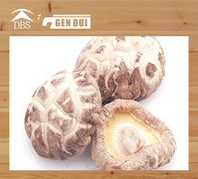mushroom with rich nutrition white flower shiitake mushroom with rich nutrition