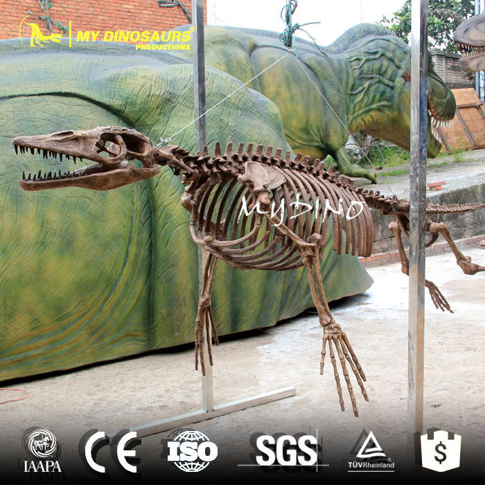 Ambulocetus Skeleton.jpg