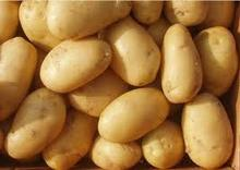 Turkey High Quality Fresh Potatoes