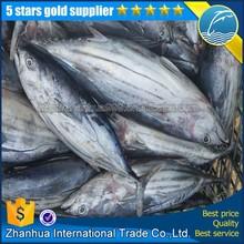 skipjack tuna price bulk china and frozen skipjack tuna sale