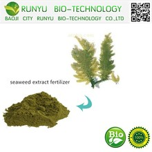 100% natural seaweed extract for making seaweed extract fertilizer