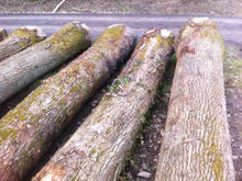 European White Oak Round Logs