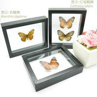 FOUSEN(039 Random Species) Nature&Art (Double Glass) rectangle framed butterfly