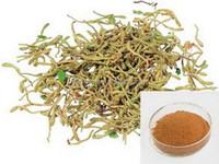 Natural colour plant fast speed honeysuckle flower bud extract