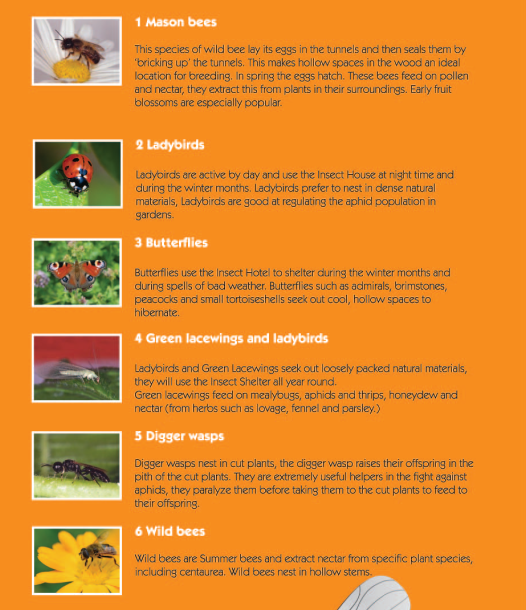 Triangle forme bee habitation insectes maison t h tel for Maison container 50000