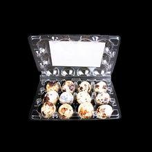 12 PCS Clear Plastic Quail Egg Tray