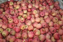 Fruit Apple for Export