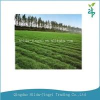 2015 Healthcare Instant energy drink powder organic barley grass powder