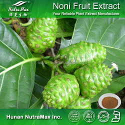 Hot sale Plant extract Noni juice concentrate/Moringa fruit extract/Noni powder