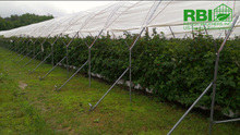 Plastic Tunnel for Strawberries Agriiculture tunnel greenhouse
