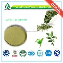 GMP Factory Supply Organic Green Tea Extract Tea Polyphenols in Tea Extract