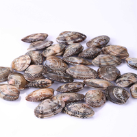 Vacuum Short Necked Clam in Shell of High Quality