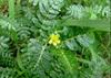 /p-detail/100-Natural-puro-Construir-tu-fuerza-Hierba-Planta-Extracto-de-Tribulus-terrestris-Saponina-de-40-Saponinas-300004197471.html