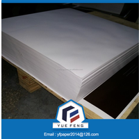 Coated White Ivory Cardboard /Folding Box Board / Solid Bleached Sulfate