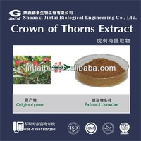 High Quality 10:1 Crown of Thorns Extract