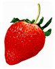 Artificial strawberry promotion gift items/Specialty Manufacturer Artificial fruit strawberry/imitation strawberry wholesale