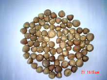 INDONESIAN SPLIT BETEL NUTS