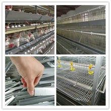 Poultry layer chicken cage on hot sale in kenyan market