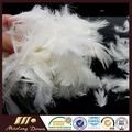 4-6cm pura penas de pato branco para venda almofada travesseiro materiais de enchimento preço mais barato