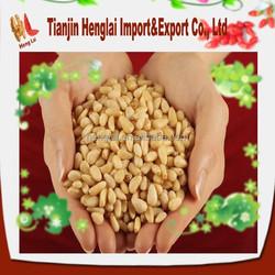 cheap bulk pine nut for sale 1