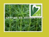 Natural Stevia Extract& Stevioside, Rebaudioside with Good qality