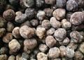 يوننان البرية زراعة درنة الكمأة السوداء الطازجة الصحراء