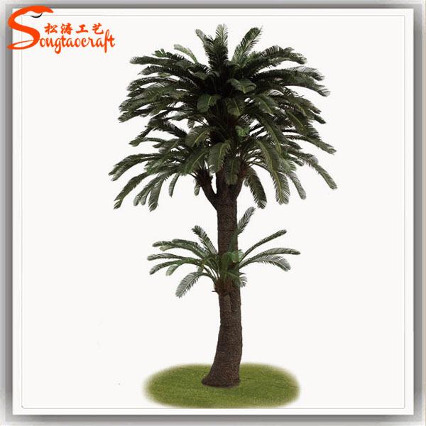 Cycas Revoluta Price Cycas Revoluta Price Palm