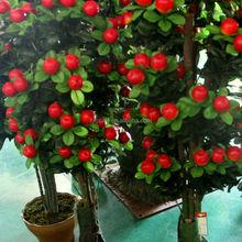 Planta artificial pote de frutas da árvore decoração verde bonsai árvore de fruto atacado bonsai árvore de fruto
