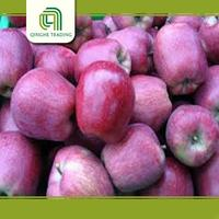 early red apple pome fruit product type fresh apple with low price