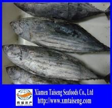 1.8kg-3.4kg frozen Katsuwonus Pelamis Frozen Skip Jack Tuna