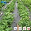 Black Plastic Mulch,Weed Barrier Fabric For Low Cost Agricultural Greenhouses