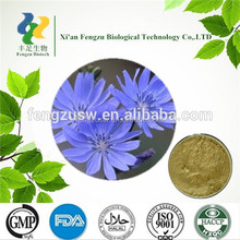 High Quality chicory extract, nature Inulin 5%,pure chicory root extract powder