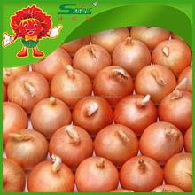 Wholesale Fresh Egyptian Golden Onion