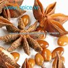 /p-detail/Star-aniseed-400000095004.html