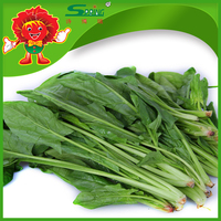 Wholesale price for 2015 new crop fresh spinach