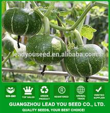PU07 Jinli malattie no.2 ibridi resistenti semi di zucca verdi per piantare, da 1,5 a 2 kg di peso, prima maturità