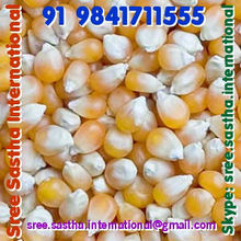 Yellow maize corn for Animal Feed