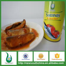 Preserved fish salty taste canned sardines in tomato sauce with 3 years shelf life
