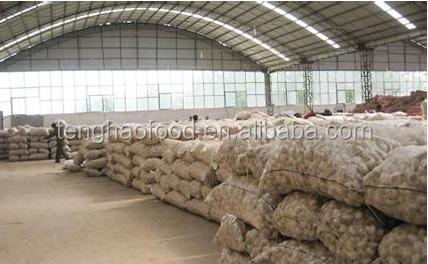 garlic material.png
