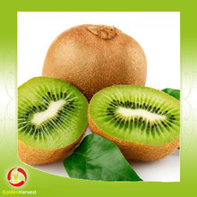 low price dried Kiwi Dried sliced kiwi fruit dried green kiwi fruit for sale