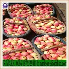 Sell fresh gala apple new crop