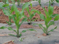Agriculture Usage and Stretch Film Type plastic mulch film
