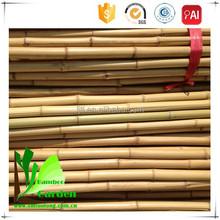 Bamboo Poles Canes Sticks
