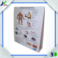 3D Raised Relief Anatomical Medical Charts Posters With Custom Designs