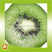 Chinese hot sale nutritious new season kiwi