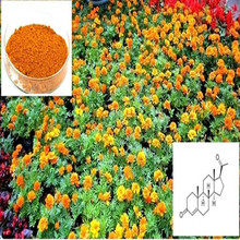 supply plant extract high quality marigold flower extract