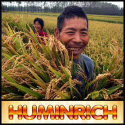 Humirich Shenyang Organic Humic Acid Controlled Release Granular Fertilizer For Rice