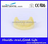 Dental Implant Practice Model (no gum)