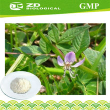 New Products On China Market Andrographis Paniculata Herb for medicinal herbs