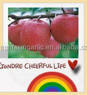 no pesticide residues fresh qinguan apple